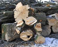 Nur das Holz bleibt übrig
