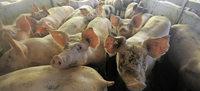 Bauern rufen zu einer Wir-haben-Agrarindustrie-satt-Demonstration auf
