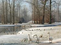 Zwangsversteigerung: Niemand bietet für Umkircher Park