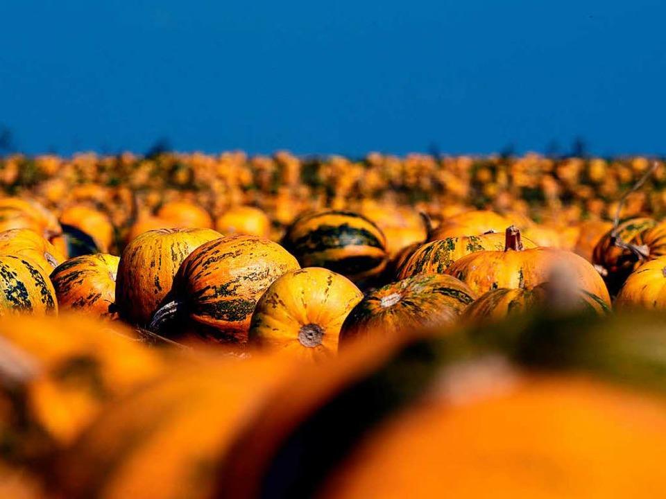 Auf den Feldern des Ökodorfs wächst Ob...ndehof  direkt vermarktet (Symbolbild)  | Foto: dpa