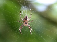 Wenn eine Spinne einen Einbruchsalarm auslöst