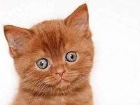 Müssen Hauskatzen bald versteuert werden?