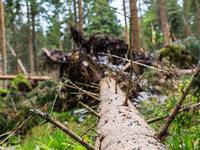 Förster wehren sich gegen weitere Bannwälder