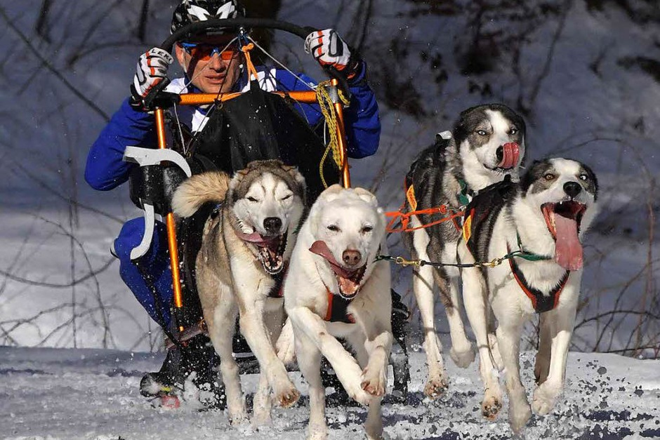 Beste Schneebedingungen, Traumwetter und schon am Samstag mehr Besucher als je zuvor bei den Deutschen Meisterschaften der Schlittenhunde in Todtmoos. (Foto: Wolfgang Scheu)