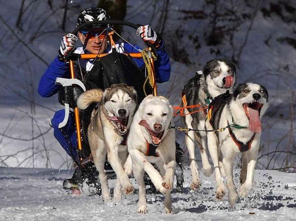 Beste Schneebedingungen, Traumwetter und schon am Samstag mehr Besucher als je zuvor bei den Deutschen Meisterschaften der Schlittenhunde in Todtmoos.
