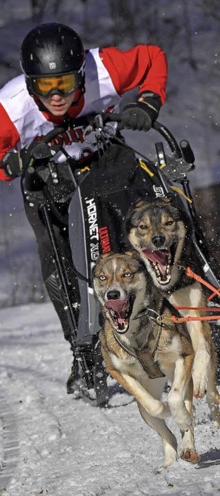 Die Sportler und vor allem die Hunde gaben alles beim Rennen.  | Foto: Wolfgang Scheu