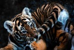 Fotos: In El Salvador gibt es Königstiger-Nachwuchs