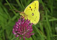 Bildervortrag über Schmetterlinge in St. Blasien