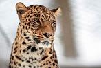 Die schönsten Tierfotos 2017 – bisher