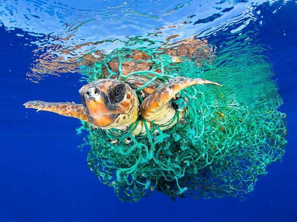 Erster Preis in der Kategorie Natur: Das Bild von Francis Perez zeigt eine Meeresschildkröte, die in einem Fischernetz verfangen ist.