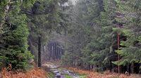 Mit dem Klima ändert sich der Wald im Tal