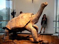 Der einsame George ist wieder auf den Galápagos-Inseln