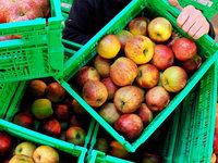 Schweizer bauen in Südbaden Gemüse für die Schweiz an