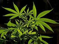 Cannabishändler aus Müllheim bekommt milde Strafe