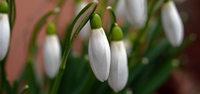 Der Frühling steht in den Startlöchern