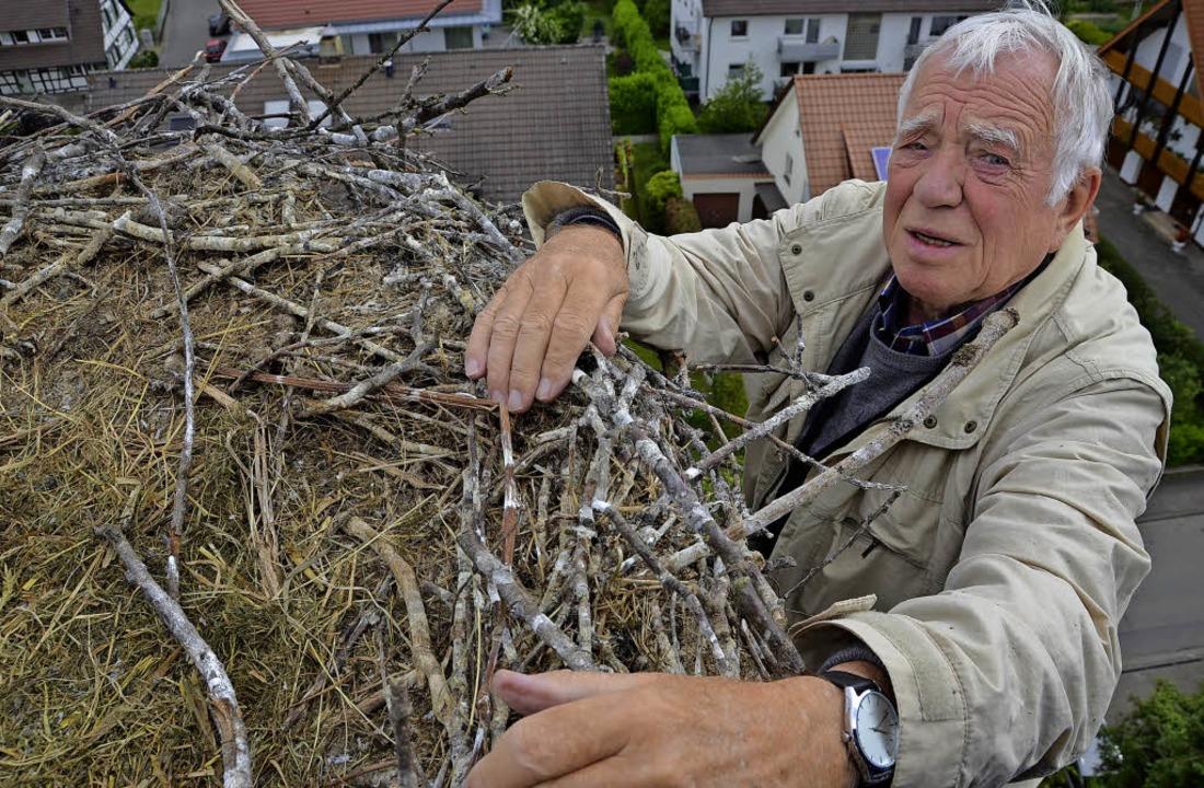 Die Störche haben ihr Nest auf dem Tur...itet (hier ein Archivbild von 2015) .   | Foto: Gabriele Fässler/Max Schuler
