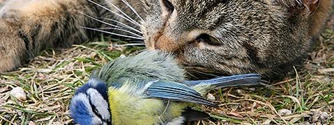 Ist eine Katzensteuer sinnvoll für die Umwelt?