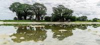 Wenn die Kalahari blüht