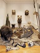 Das Offenburger Museum im Ritterhaus setzt auf Interaktion mit seinen Besuchern