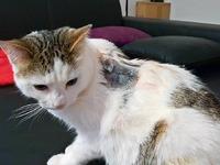 Angeschossenes Kätzchen muss notoperiert werden