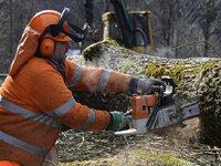 Stau im Höllental: Warum an der B31 Bäume gefällt werden müssen