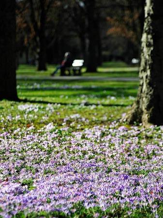 Vorfrühlingsimpressionen in Bad Krozingen