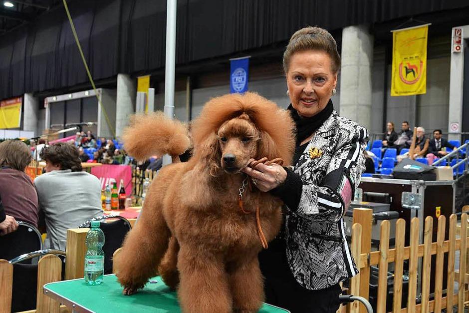 Rassehunde-Ausstellung in Offenburg: Die Hunde kamen aus 23 europäischen Ländern. (Foto: Anika Maldacker)