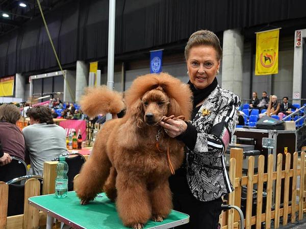 Rassehunde-Ausstellung in Offenburg: Die Hunde kamen aus 23 europäischen Ländern.