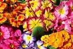 Fotos: So lässt der Frühling Südbaden erblühen