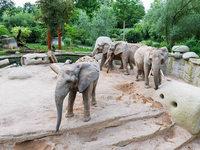 Mehr Platz: Neue Elefantenanlage im Zoo Basel