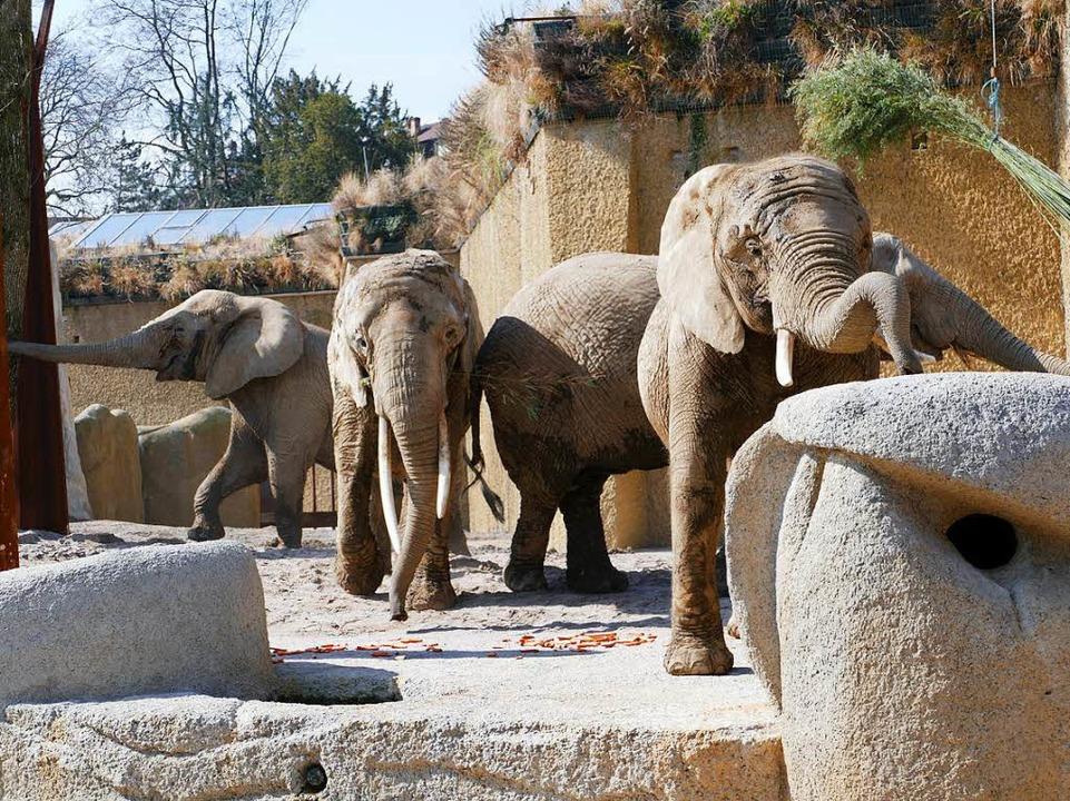 Die neue Elefantenanlage in Basel  | Foto: Kathrin Ganter