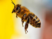 Spielplatz am Birkenweg wegen Wildbienen gesperrt