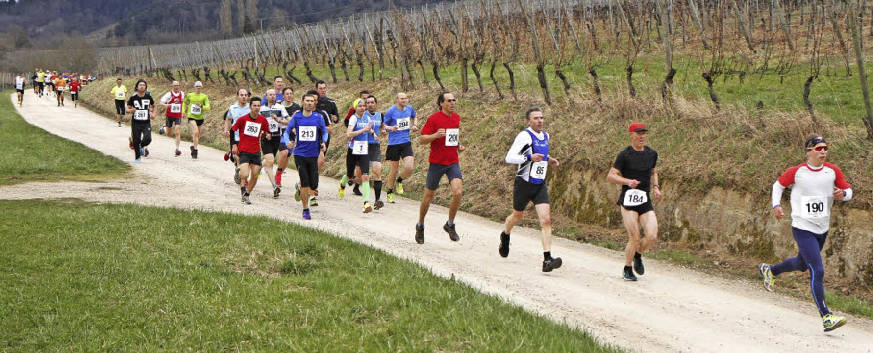 Vorbei an Rebhängen: Die reizvolle Str...aßen rund 300 Läuferinnen und Läufer.   | Foto: Winfried Stinn