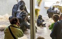 Weniger Besucher im Basler Zoo