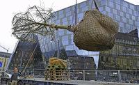 Bäume auf der Baustelle