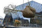 Fotos: Platane im Anflug – Freiburg pflanzt Baum mit Hilfe eines Krans