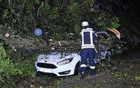 Baum schrottet Auto