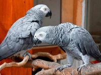 Tierheim verpartnert einsame Tiere in Singlebörse
