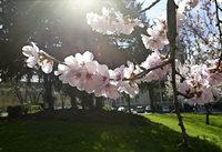 Der Frühling zeigt sich in zartem Rosa