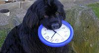 Kuno dreht schon mal an der Uhr