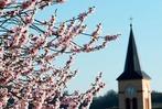 So schön kommt der Frühling in Südbaden an
