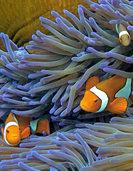 Zyklon Debbie könnte Korallen beschädigt haben