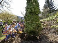 Kindergartenkinder pflanzen Fichte in Günterstal