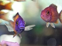 Fischpartner gleichen sich an – Menschen auch?