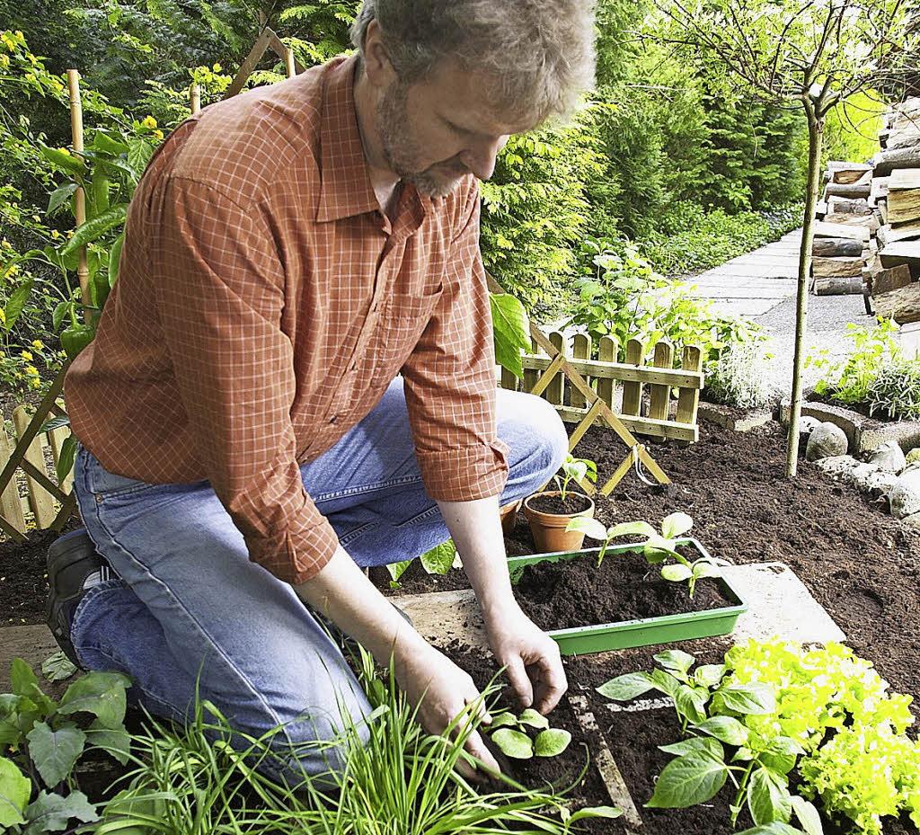 nutzgarten im april pflanzen und s en von geh lzen gem se und kr utern haus garten. Black Bedroom Furniture Sets. Home Design Ideas