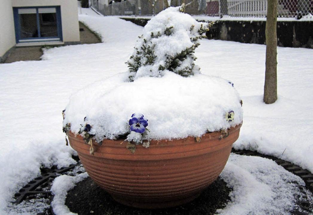 Weihnachten im Klee, Ostern im Schnee? - Bad Säckingen - Badische ...