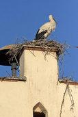 Storch beehrt das Rathaus