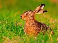 15 Tipps für ein tolles Osterwochenende in Südbaden