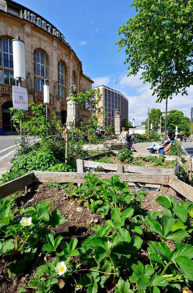 freiburg freie beete kein urban gardening mehr vor dem stadttheater freiburg badische. Black Bedroom Furniture Sets. Home Design Ideas