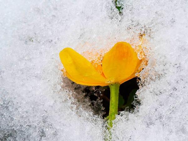 Schnee bei Hofsgrund auf dem Schauinsland